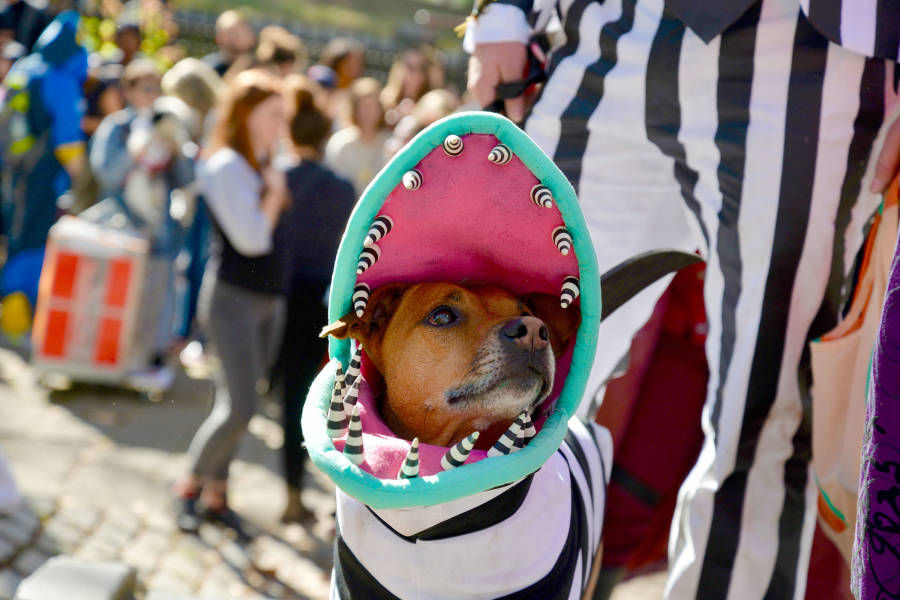 Great Pupkin Halloween Costume Contest