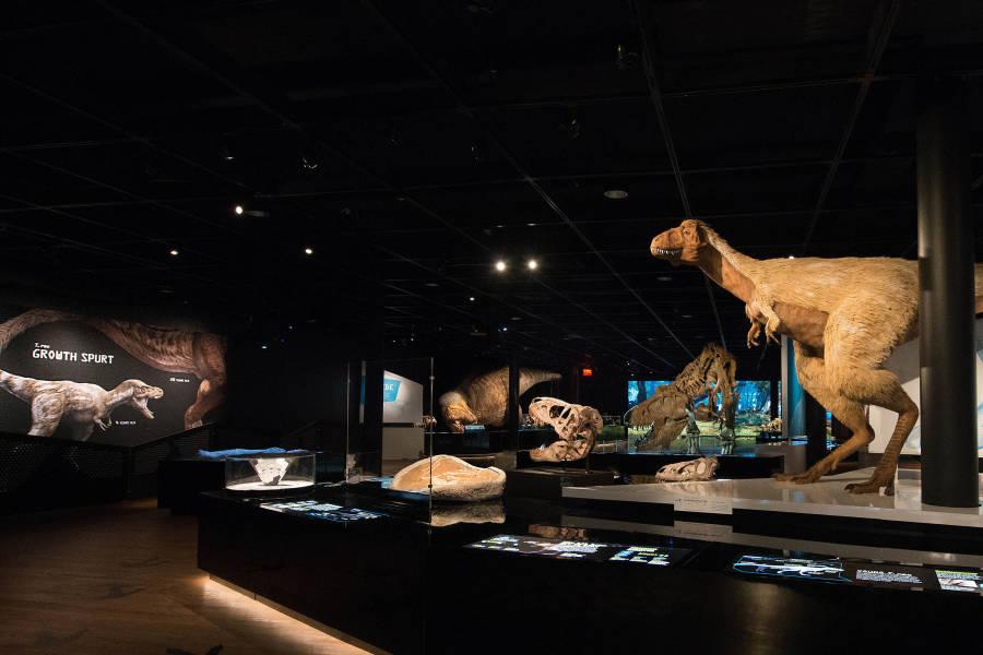 T-Rex, UWS, Manhattan, AMNH