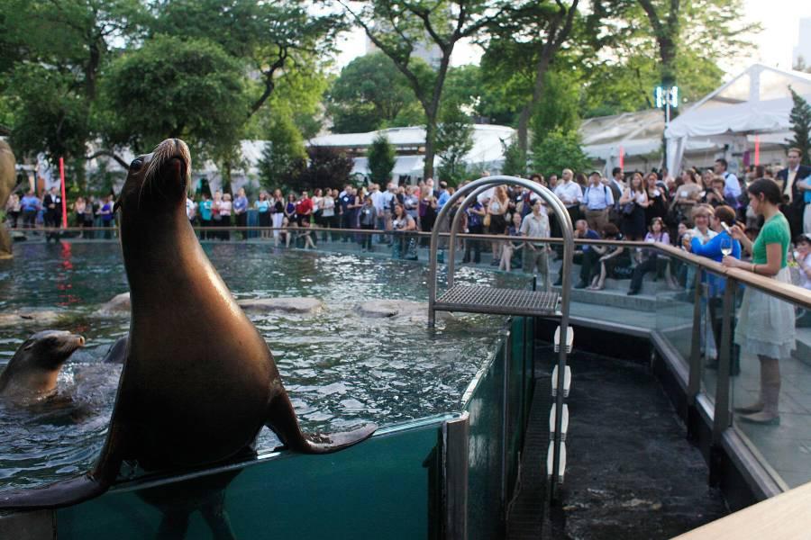 Central Park Zoo, selos,