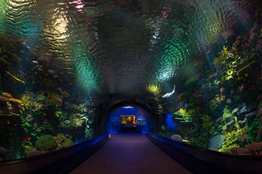 New york aquarium, shark tunnel