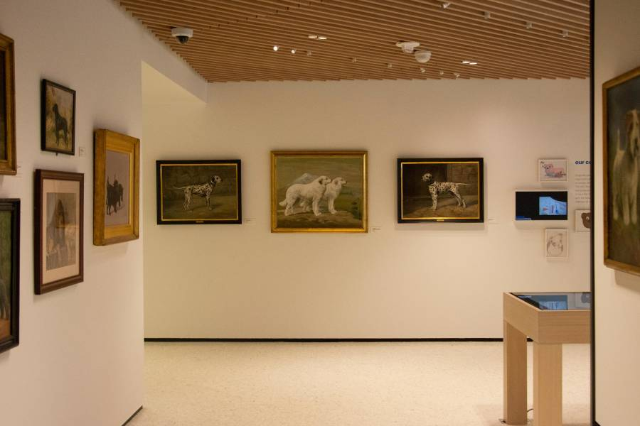 Dog museum interior, paintings