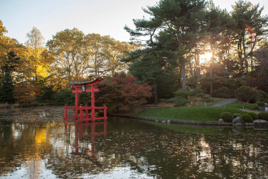 Brooklyn Botanical Garden, free museum nyc November through February on weekdays