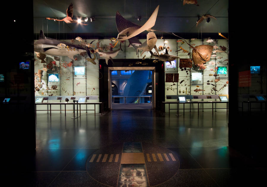 AMNH, ocean life, interior