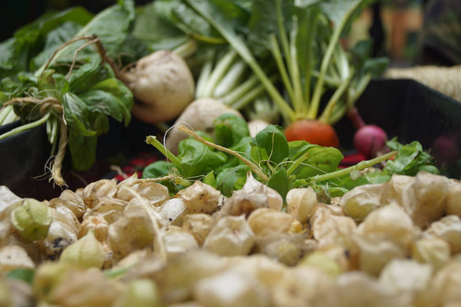 harlem grown, produce