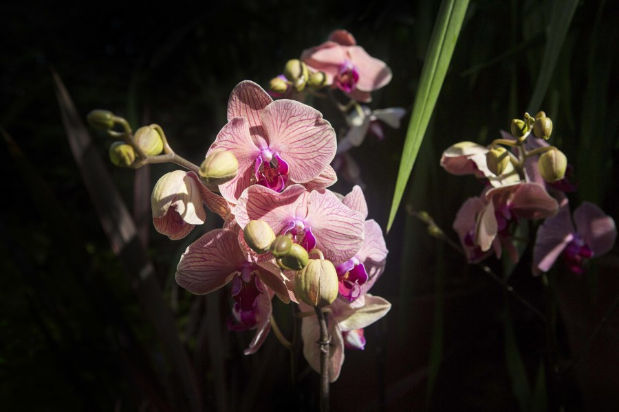 The Orchid Show,