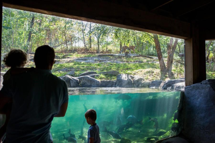 Bronx Zoo, family