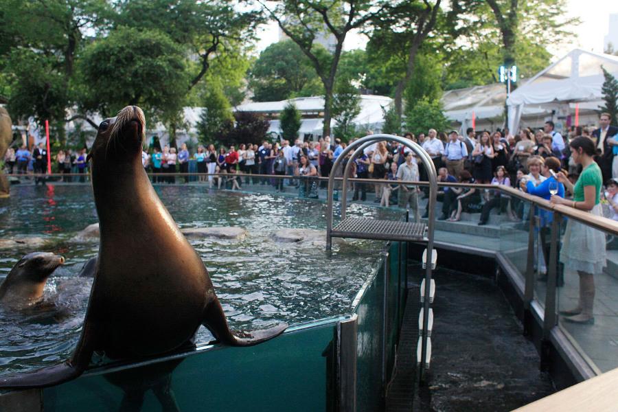 Central park zoo, seals,