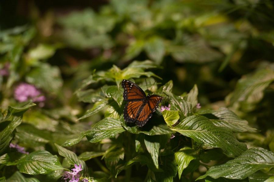 Conservatório de borboleta nyc