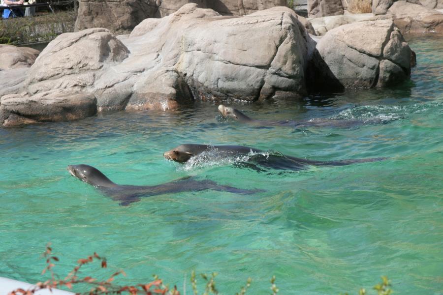 Bronx Zoo nyc