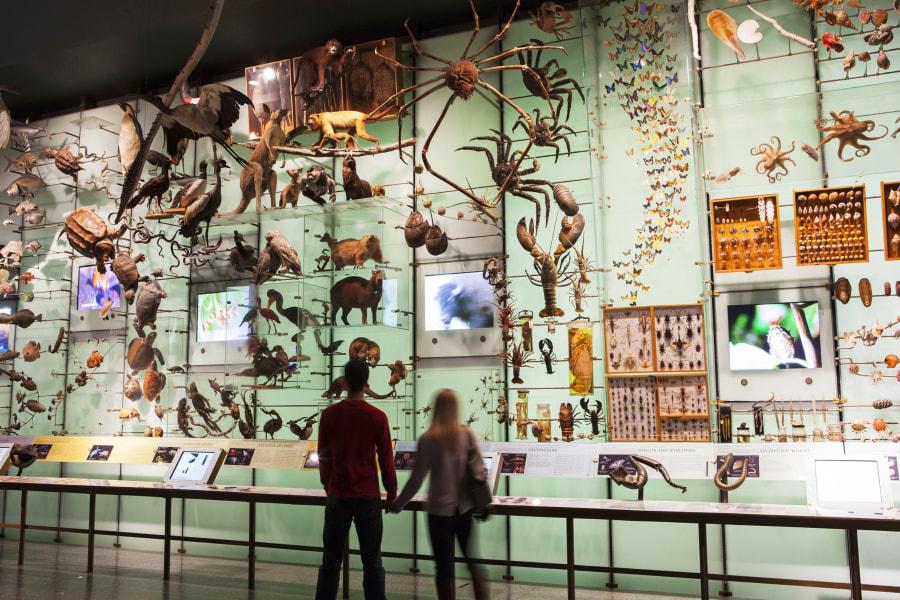 American Museum of Natural History interior
