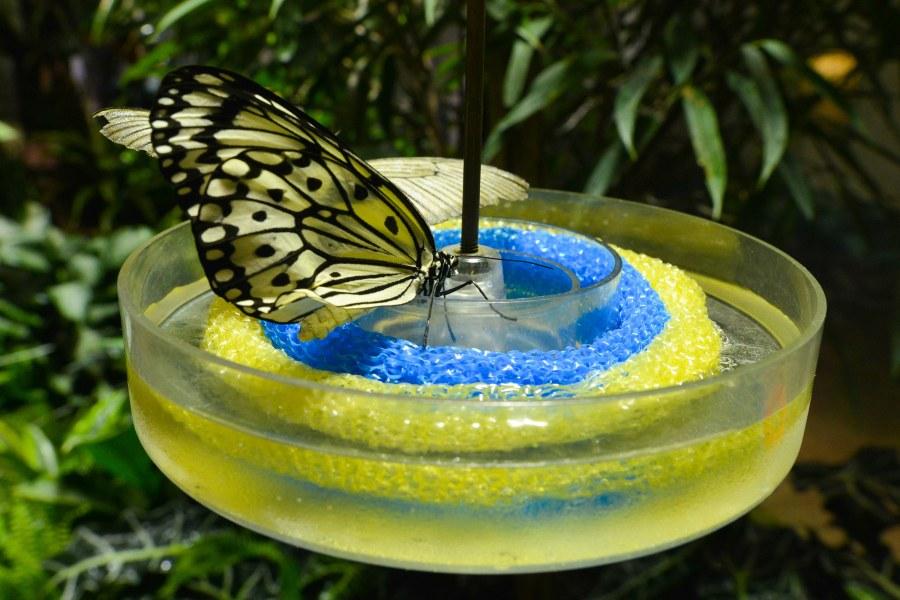 Butterfly Conservatory.